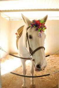 horse-halloween