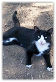 Tux the Cat