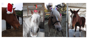 xmas horses 4 2017